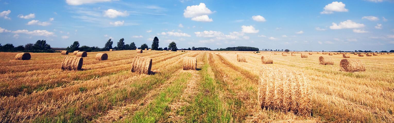 Farm & Agriculture Insurance